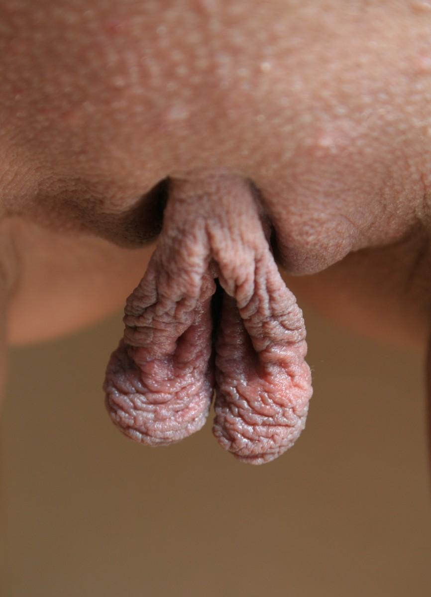 большие половые губы порнуха некоторые